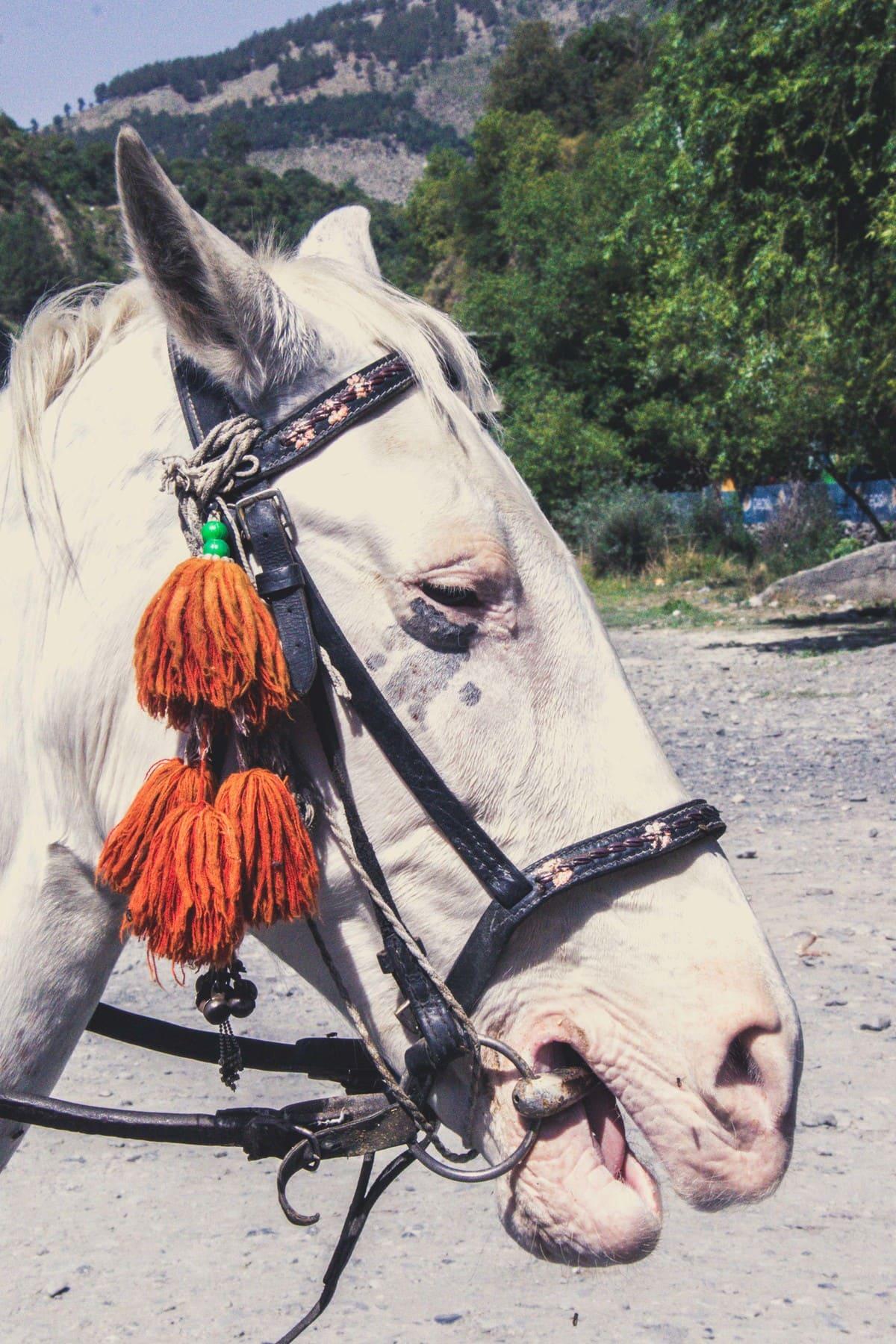 Horse on trekking trip to Dagri Forest