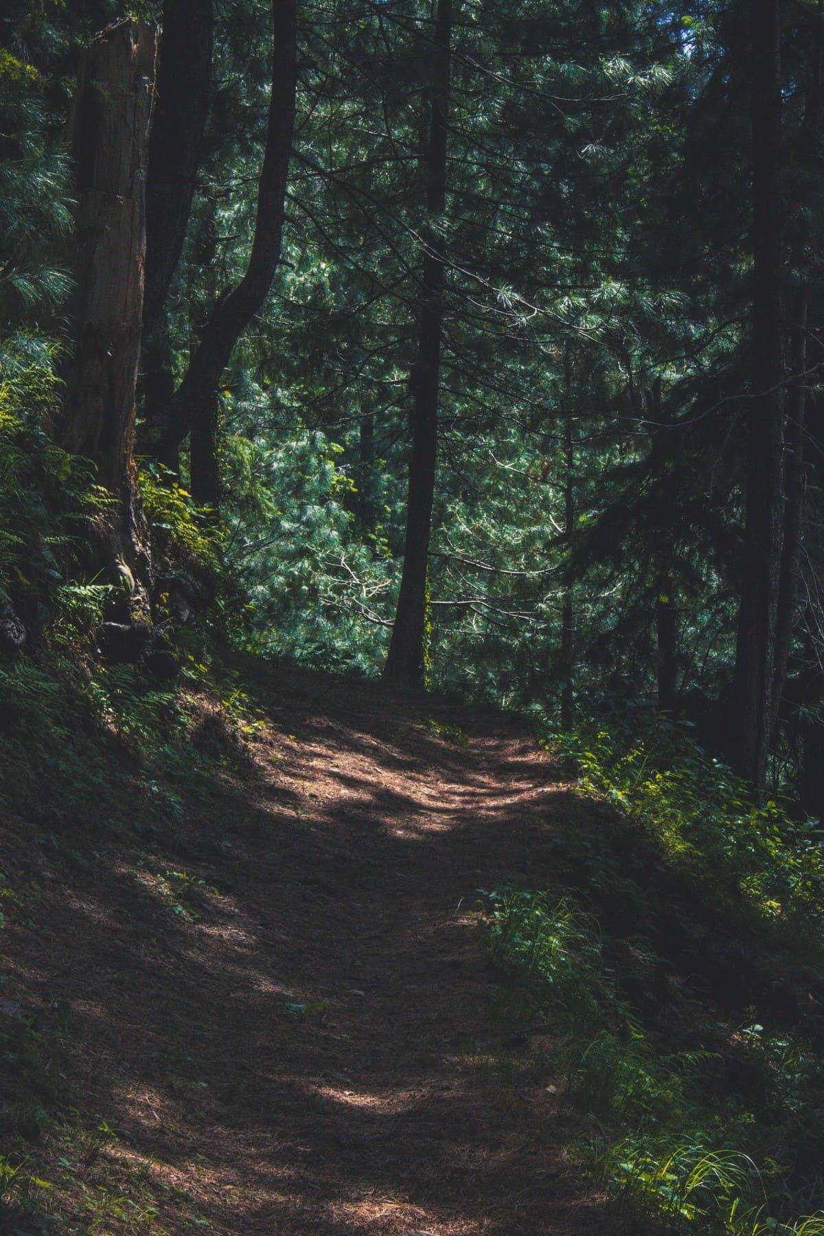 Landscape on trekking trip to Dagri Forest
